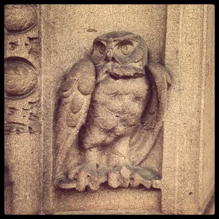 NM_owl